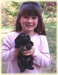 My daughter Andrea is pictured with a 6 weeks old phantom colored puppy, black and tan in markings, similar to that of a Doberman color.