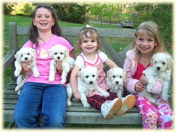 Pictured above is our three daughters with a litter of puppies from Lizzy and Heartbreaker's previous litter. They are typically cream or light colored puppies.